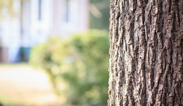 Teaming Up With Tree Experts – Why You Should Give Them A Call Today