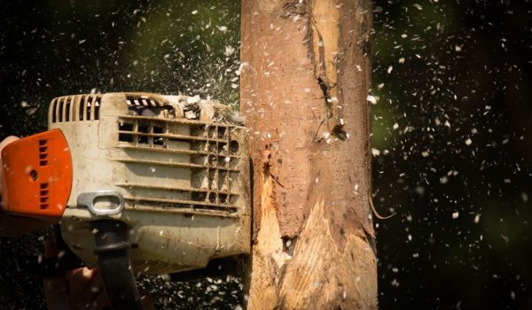 Making a Cost-Effective Choice When Shopping for a Chainsaw – Valuable Tips